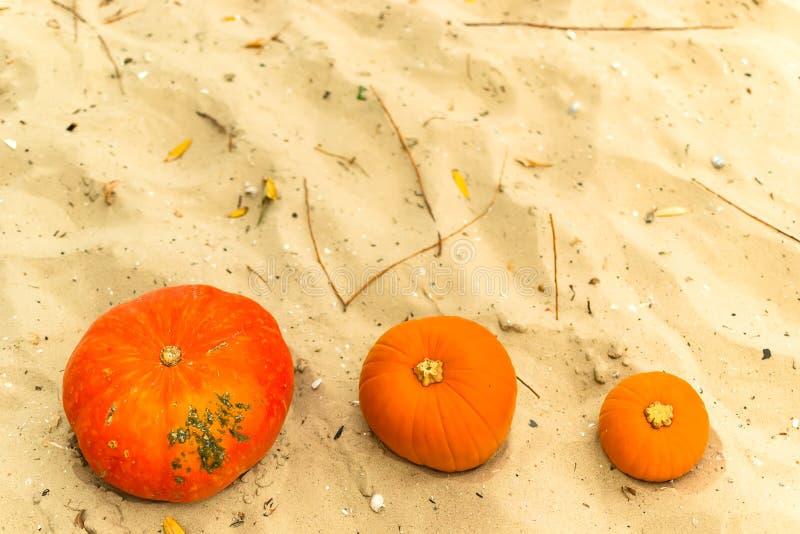 Bania w naturze jesieni żniwa wakacyjny festiwal Halloween dzień nie żyje Hallowmas fotografia royalty free