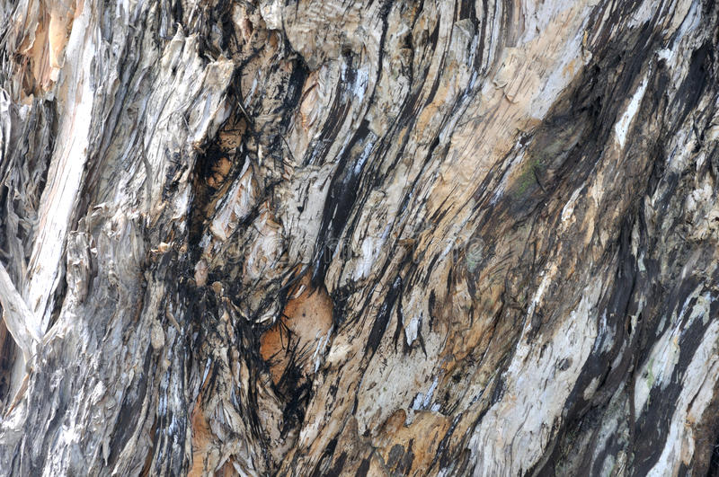 Download Banian Tree Trunk Surface Color And Texture Stock Image - Image: 26614623