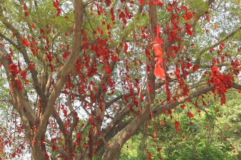 Baniano de la felicidad con las cintas rojas en China imágenes de archivo libres de regalías