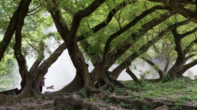 Baniano enorme en Xiapu, China foto de archivo libre de regalías