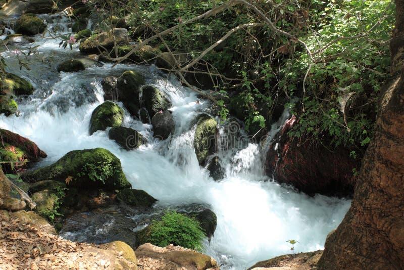Banias rzeka, Górny Golan rezerwat przyrody fotografia stock