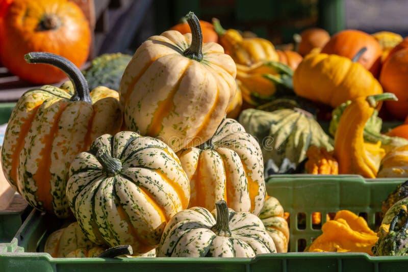 Banie Brogują, pomarańcze i zieleń, na rynku w świetle słonecznym, przygotowywającym dla Halloween i dziękczynienia zdjęcia royalty free