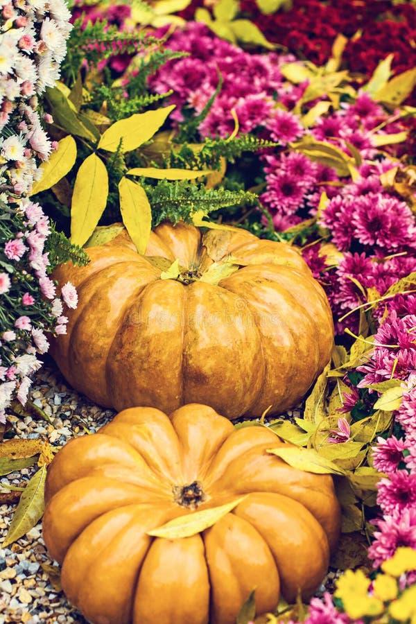 Banie Jesieni dekoracja ogród, jesień wystrój Banie i jesień kwiaty Halloween, dziękczynienie, dekoracja h fotografia royalty free
