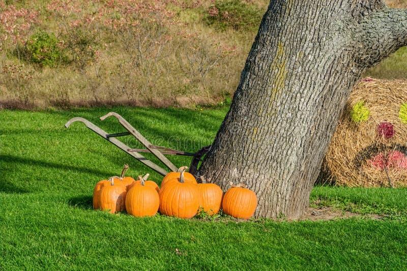 Banie Obok drzewa i stary wyga Tiller zdjęcia stock