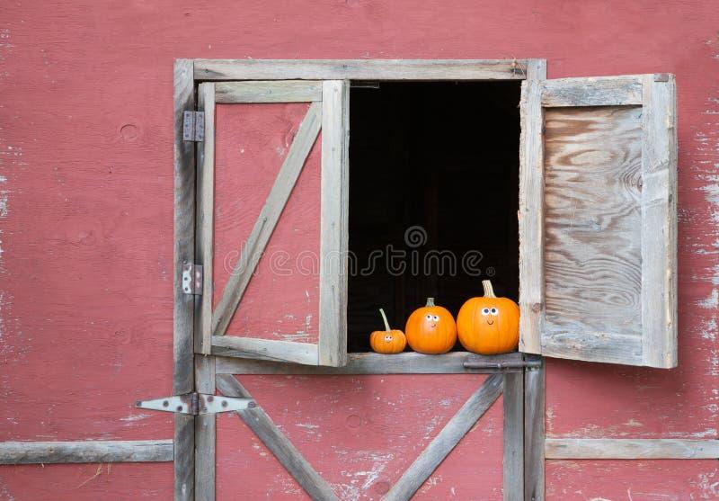 Banie w stajni okno zdjęcie royalty free