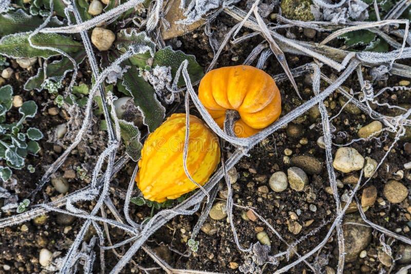 Banie w zimie zostają przy polem zdjęcia stock