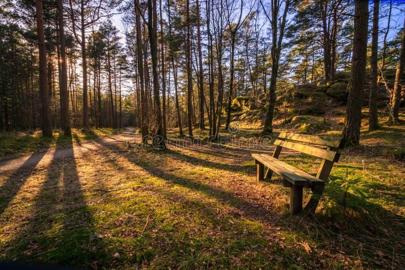 Bank in een pijnboomhout, bomen die schaduwen in avondzonlicht werpen in Furulunden, Mandal, Noorwegen royalty-vrije stock foto