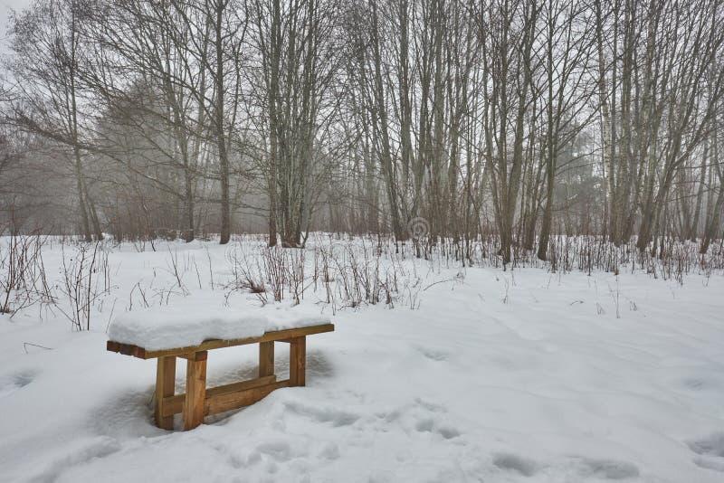 Bank in einem schneebedeckten Wald stockfotos