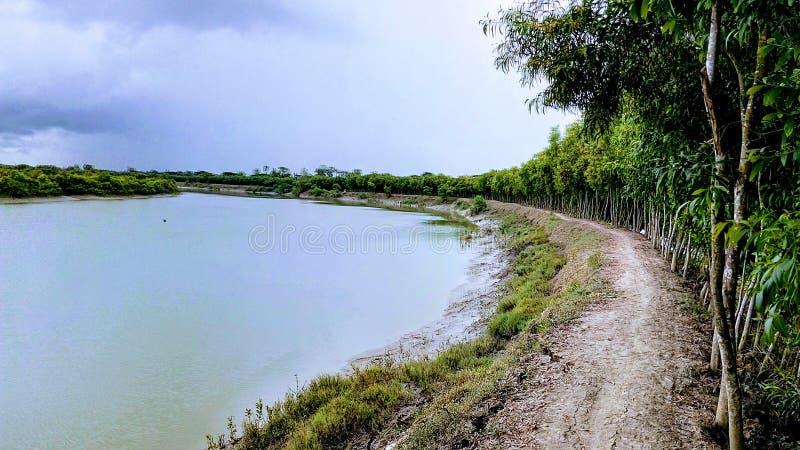 Bank eines Stromes mit Baumreihen gestalten Schönheit landschaftlich stockfotos