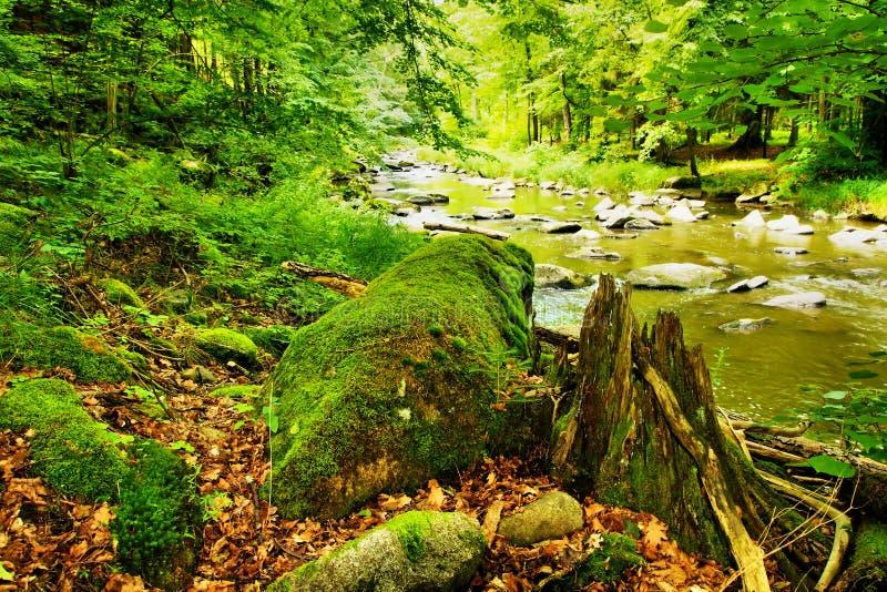 bank floden arkivbilder