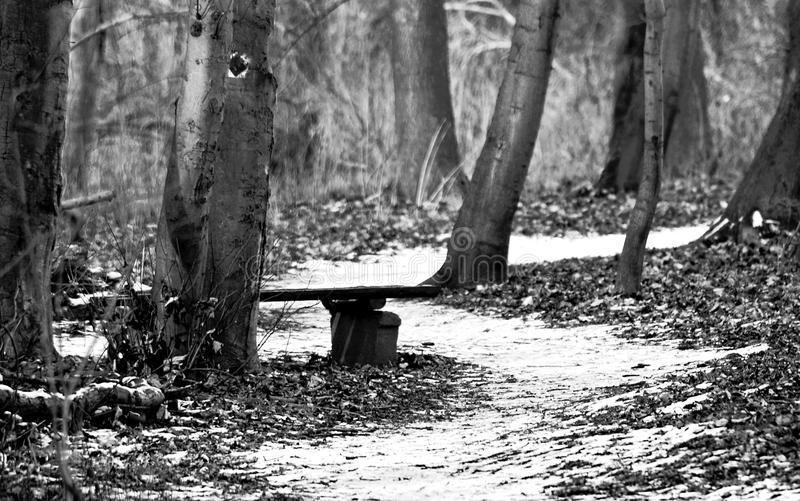 Bank in Forest at Winter. This Picture was taken at a Walk at a cold wintersday. I used my Nikon D70 with a 18-300 Tamron Objective stock images