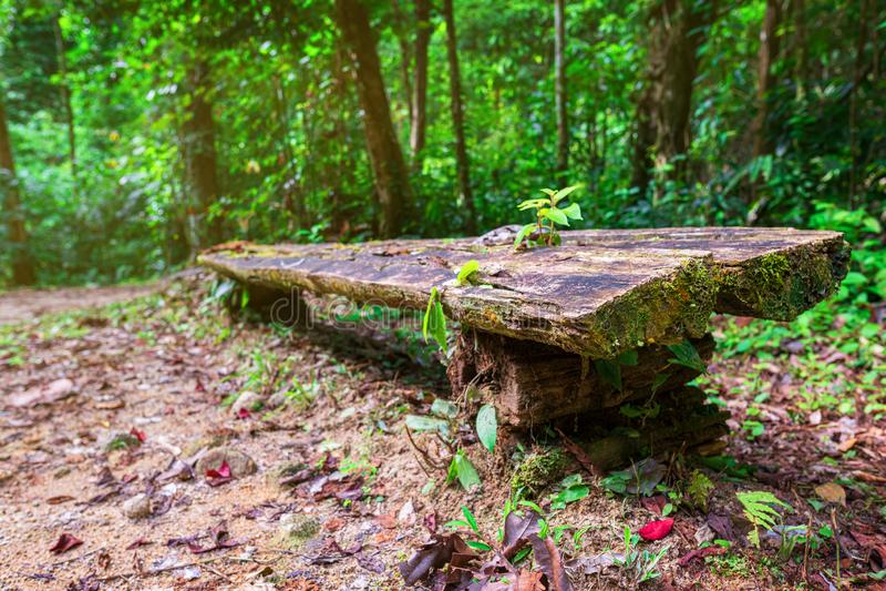 Bank in het hout Een plaats waar u op de manier aan Chong Fa-waterval kunt rusten in de tropische wildernis Thailand, Azi? stock afbeelding