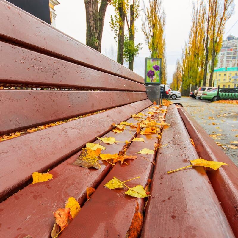 Bank in het mooie de herfstpark na regen royalty-vrije stock foto's