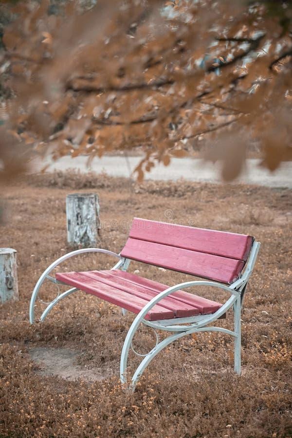 Bank in het park Mooie plaats Autumn Landscape stock foto's