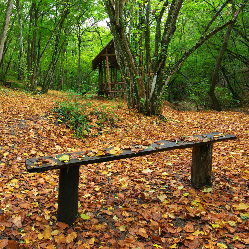 Bank im Herbstwald lizenzfreies stockbild