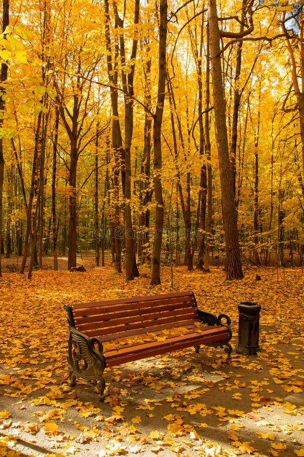 Bank met Bladeren in Autumn Park In Sunny Day stock fotografie