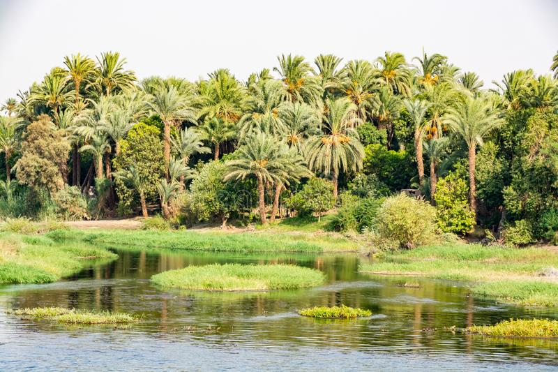 Bank of Nile river seen during touristic cruise, Egypt royalty free stock images
