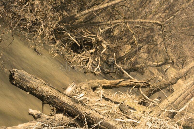 Download Bank of river after flood stock image. Image of tree, flood - 1406321