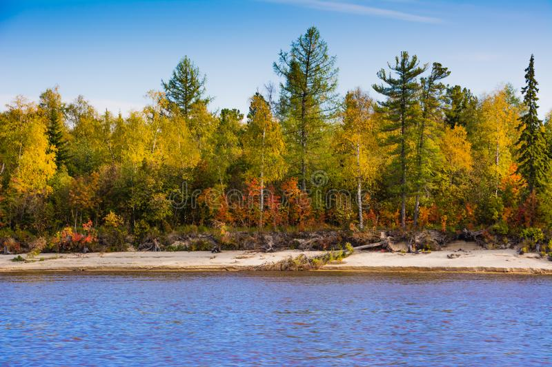 The bank of the river Nadym. Yamal royalty free stock images