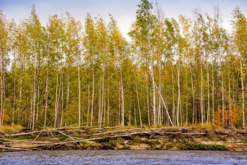 The bank of the river Nadym. Yamal. Beutifull landsape. Arctic nature stock photo