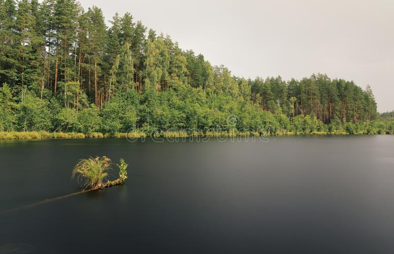 The bank of the small forest lake during the short summer rain stock photo