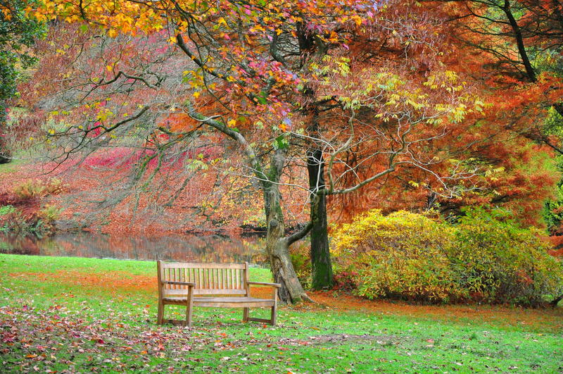 Bank in Stourhead-Garten - Autumn Colours stockfotografie