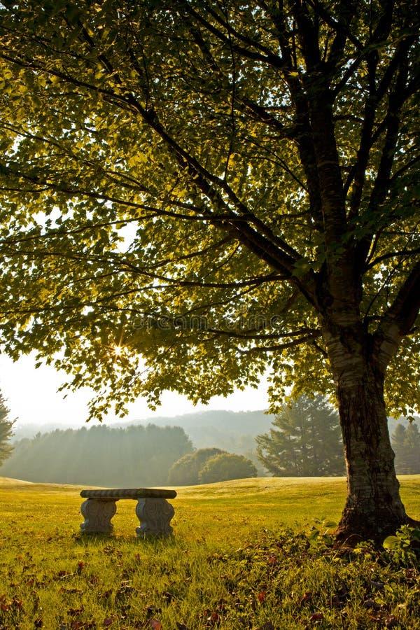 Bank unter Baum im Herbst auf Golfplatz stockbild