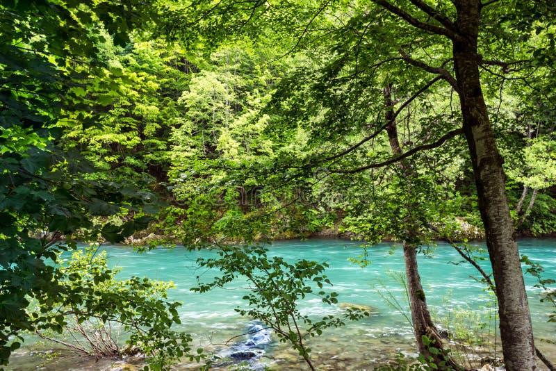 Bank van de het bergrivier en bos in Montenegro stock afbeelding