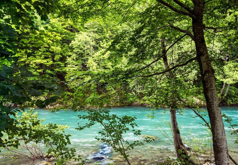Bank van de het bergrivier en bos in Montenegro stock afbeeldingen