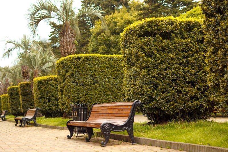 Bank voor rust in het park en de in orde gemaakte struiken stock foto's