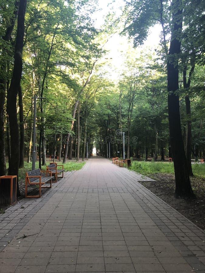Banken onder de bomen van Stryi-Park in Lviv stock afbeeldingen