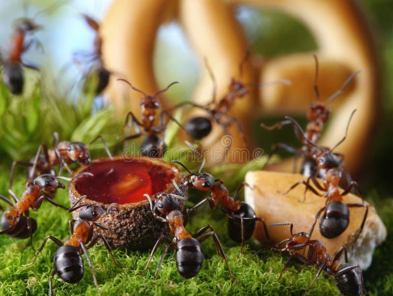 Banket in mierenhoop met honing en cake, mierenverhalen royalty-vrije stock afbeelding