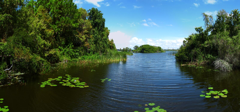 banki jego jeziorną roślinności zdjęcia royalty free