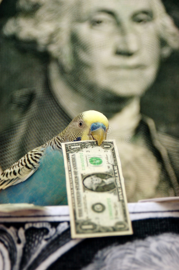 Bankier royalty-vrije stock foto's