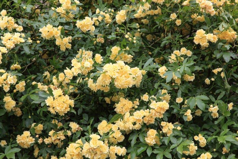 Banksia nam toe royalty-vrije stock foto's