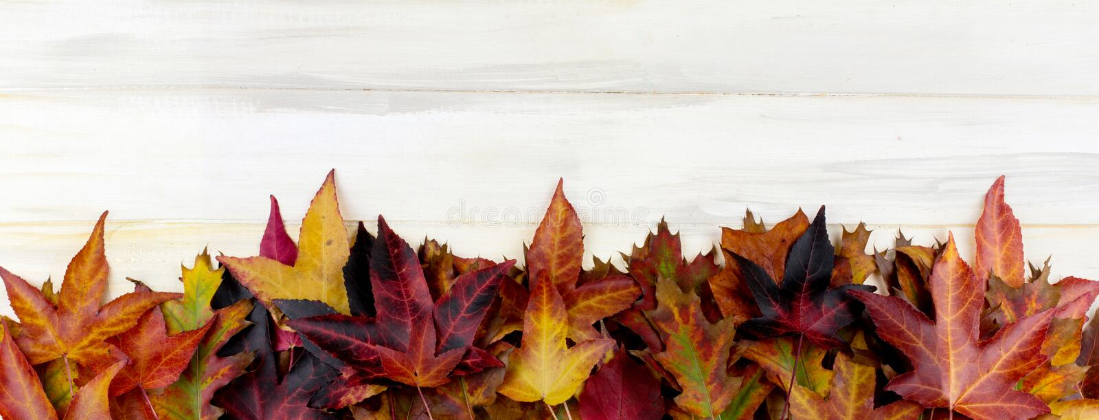 BANNER AUTUMN BACKGROUND. FRAME OF COLORFUL FALL LEAVES ON WHITE stock photos