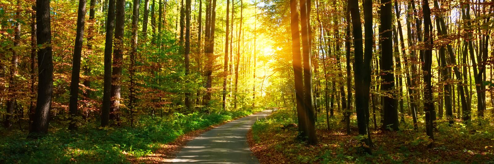 Banner 3:1. Autumn forest with footpath leading into the scene. Sunlight rays through the autumn tree branches. Copy space stock images