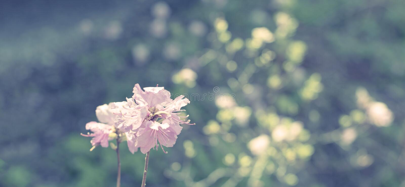 Banner Beautiful branches with flowers rosemary on the background of the sky defocus stock photo