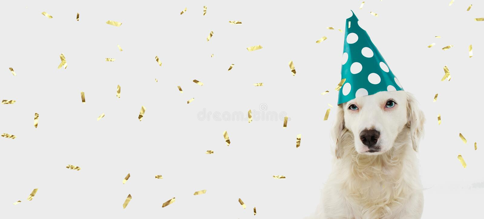 BANNER BIRTHDAY OR CARNIVAL DOG. PUPPY WEARING A GREEN POLKA DOT HAT. ISOLATED ON WHITE BACKGROUND WITH GOLDEN CONFETTI FALLING.  royalty free stock photography