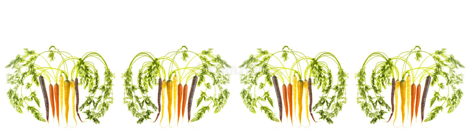 Banner of Carrots on White background royalty free stock photos