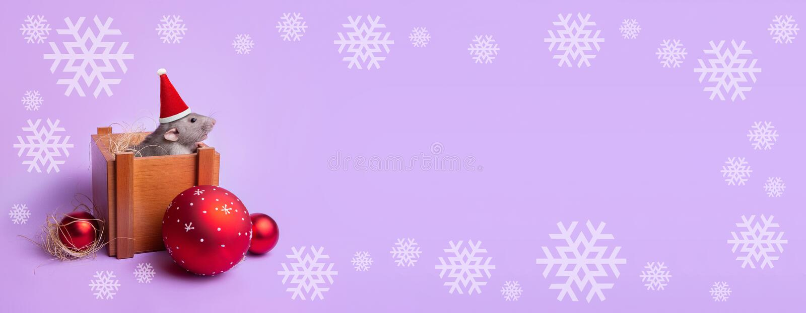Banner. Charming pet. Decorative rat dumbo in a wooden box on a lilac background. New Year`s toys. Year of the rat. Chinese New royalty free stock images