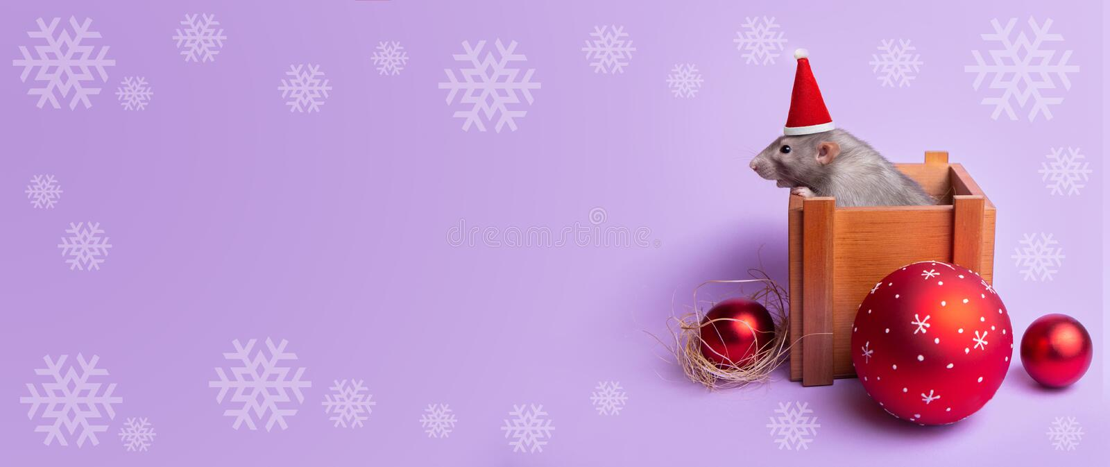 Charming pet. Decorative rat dumbo in a wooden box on a lilac background. New Year`s toys. Year of the rat. Chinese New Year. Cop. Banner. Decorative rat dumbo royalty free stock photo