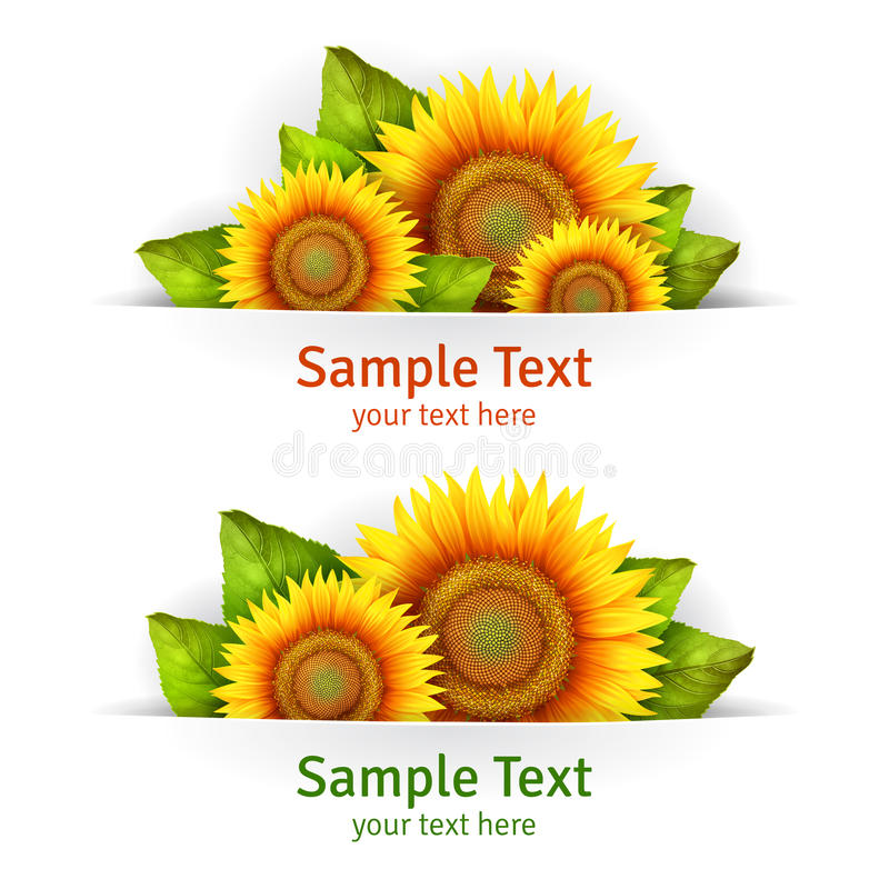 Banner floral background or card template with blooming sunflowers stock illustration