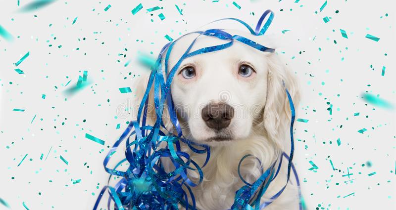 Banner funny dog celebrating new year, carnival or birthday party with blue serpentines streamers. Isolated on white background stock image