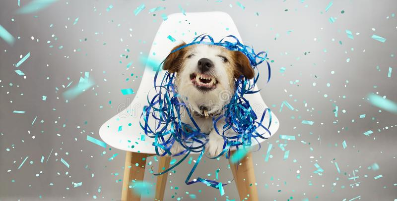 Banner funny dog smiling and showing teeth with blue serpentines, celebrating birthday, carnival or new year sitting on a stock image