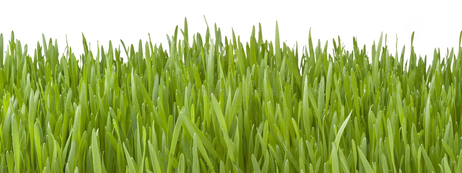 Banner Green Grass Background royalty free stock image