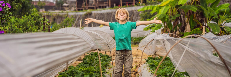 BANNER, LONG FORMAT Φυτεία φράουλας στο Μπαλί στην περιοχή Bedugul Χαρούμενο χαριτωμένο παιδί που διαλέγει και τρώει στοκ φωτογραφία με δικαίωμα ελεύθερης χρήσης