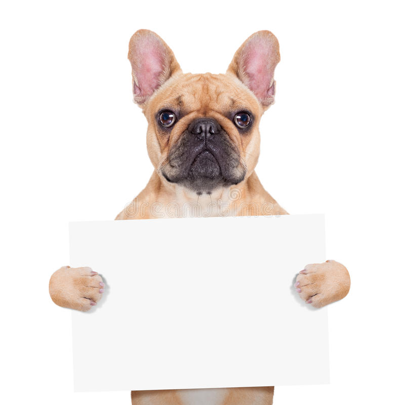 Banner placard dog stock photography