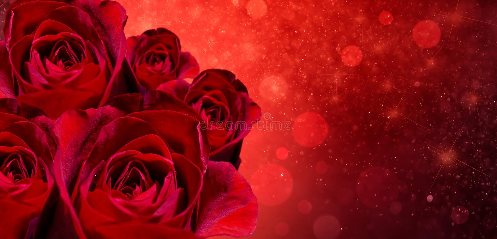 Banner Red rose bokeh red background Have space to enter text stock photography