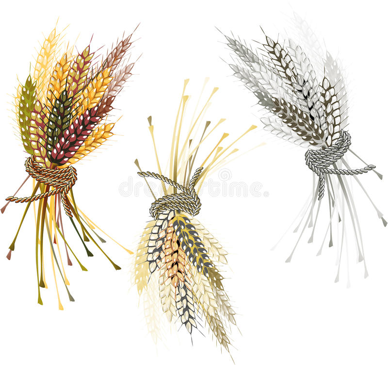 Banner from ripe wheat stock image